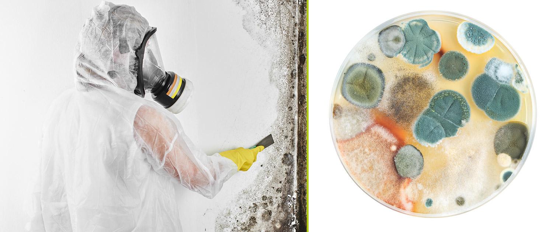Sanidomus Schiemmelbeseitigung und Laborproben